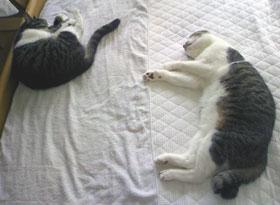 寝る猫.jpg